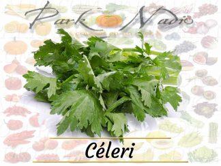 Celeri