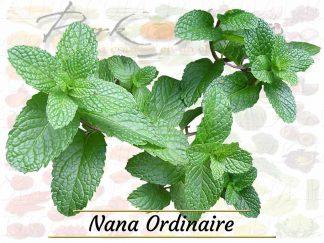 Nana Ordinaire