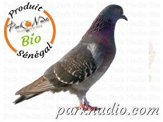Livraison de pigeon à Dakar